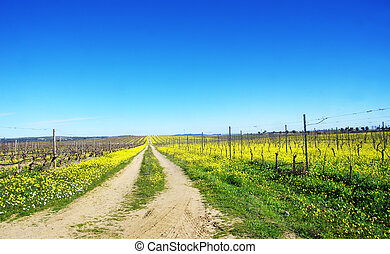 road in yellow field, south of Portugal