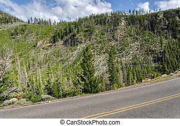 road in Yellowstone