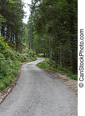 Road inside a forest in the italian dolomites