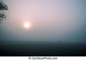 road., morgen, herbst, nebel, wald, sonnenaufgang