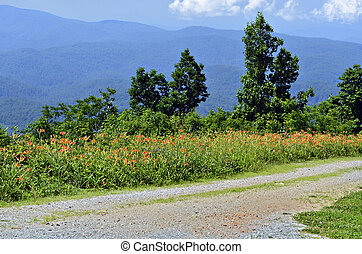 Road, Mountains and Wild Flowers