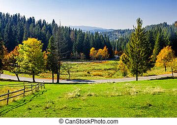 road near autumn forest on hill - asphalt road going through...