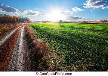 Road near field of winter crop at autumn sunrise