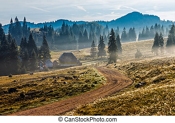 road near foggy forest in mountains at sunrise - road...