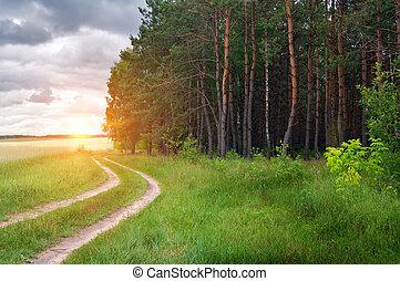 Road near wood