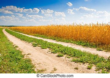 Road near yellow field of yellow wheat
