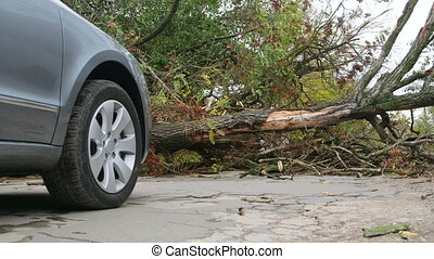 Road obstructed by fallen tree