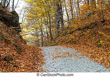 Road of Forest in Autumn