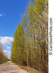 Road on a sunny spring day