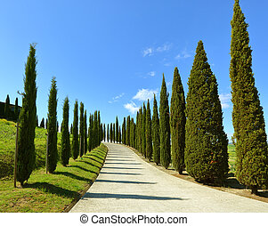 Road on hill with cypress trees in Tuscany