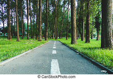 Road passing through tall trees forest