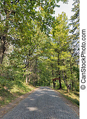Road paved with cobbles leading to Schonborn Castle. Chynadiyovo, Ukraine.