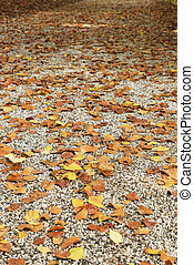 road paved with yellow leaves in autumn