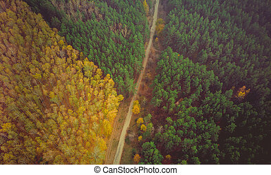 Road surrounded by a colourfull trees in the forest.