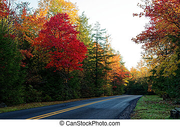 Road surrounded in fall foliage