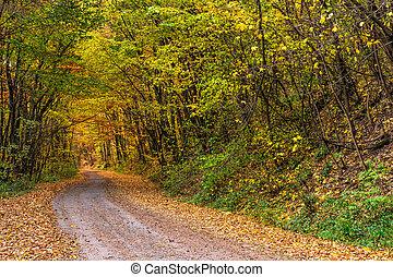 road throug autumn forest - asphalt road going through...