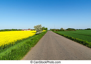 Road through a beautiful landscape by springtime