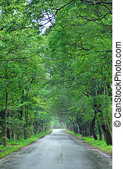 Road through a green tunnel