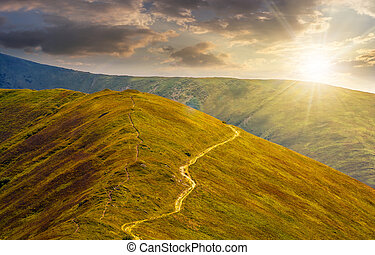 road through a meadow on hillside at sunset - winding road...
