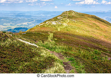 road through a meadow on hillside - winding road through...