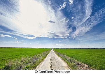 Road through a wheat field