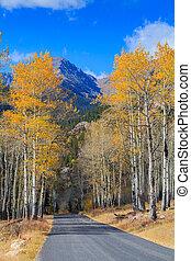 Road Through Aspen Grove in Fall