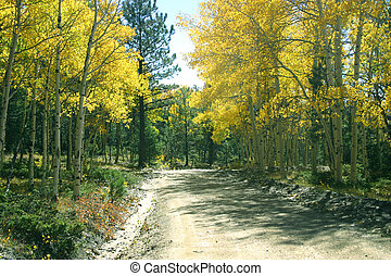 Road Through Aspens - One never knows what kind of adventure...