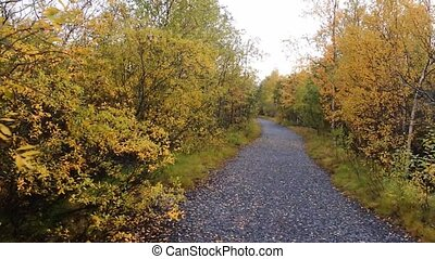 early autumn in North - road through autumn woods for a walk...
