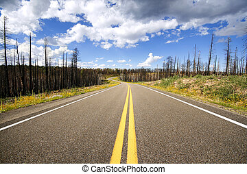 Road through burnt forest