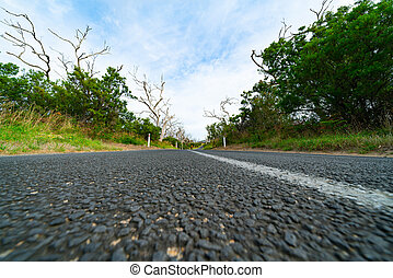 Road through bush and forest of dead trees