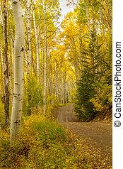Road Through Colorado Aspen trees