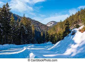 road through coniferous forest in winter. lovely nature...