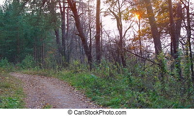 Road through forest at beautiful sunrise. - Autumn forest at...