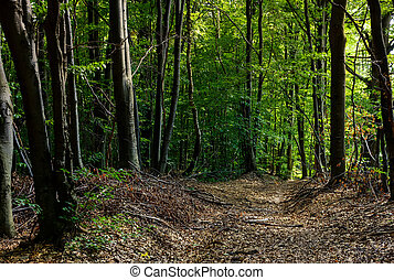 road through forest covered with weathered foliage....
