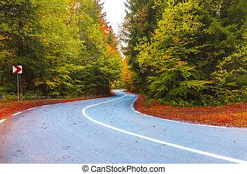 Road through forest in autumn season