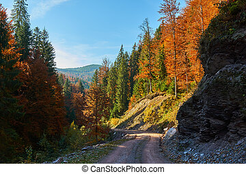 Road through forest in the fall