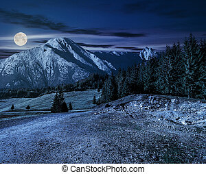 road through forest to high mountains at night - road...