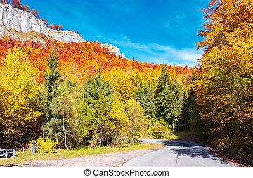 road through gorgeous serpentine in autumn forest. huge...