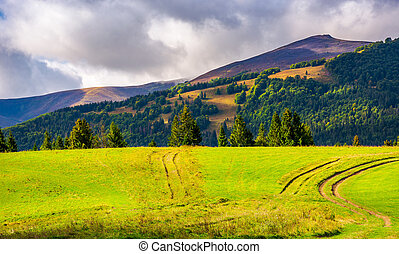 road through grassy meadow on a forested hill. lovely nature...