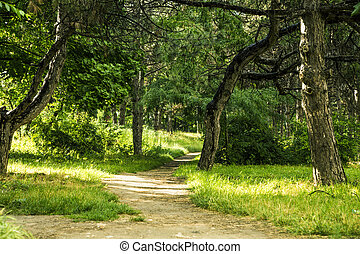 Road through Natural Forest