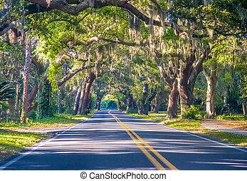 Road Through Oak Trees