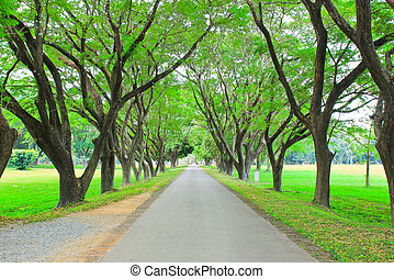 Road through row of green trees