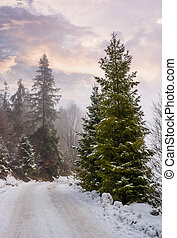 road through snowy forest on foggy morning. beautiful nature...