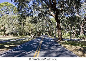 Road Through Sun Dappled Oaks