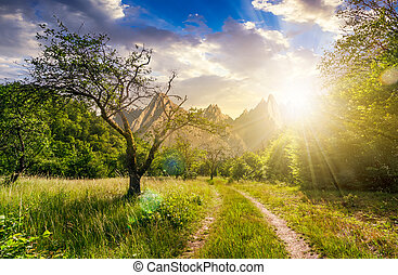 road through the abandoned orchard in mountains at sunset -...