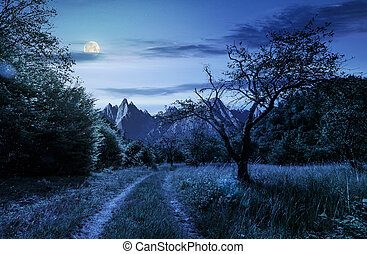 road through the abandoned orchard in mountains at night -...