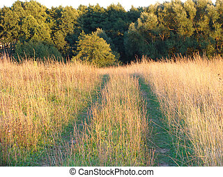 Road through the field.