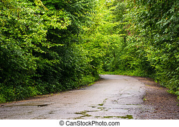 road through the forest in mountains - asphalt road through...