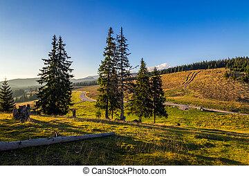 road through the forest in mountains - autumn mountain...
