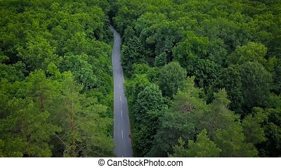 Road through the forest, view from height - aerial survey